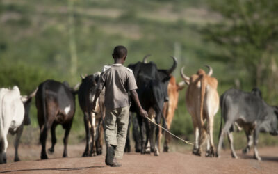 Roslin Technologies invests in diagnostic for trypanosomiasis, a global disease of livestock